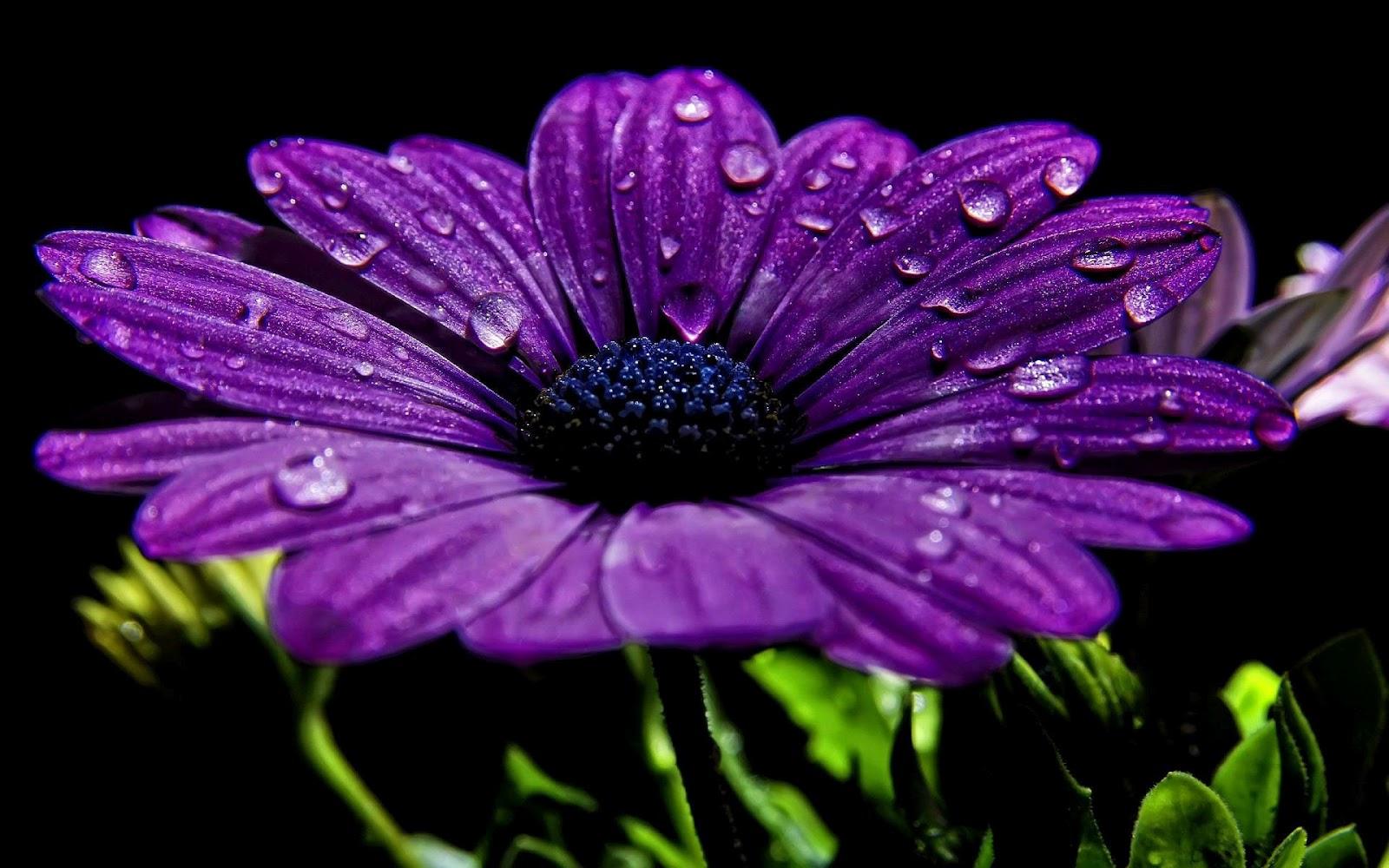 Paarse bloemen vond je mooi...